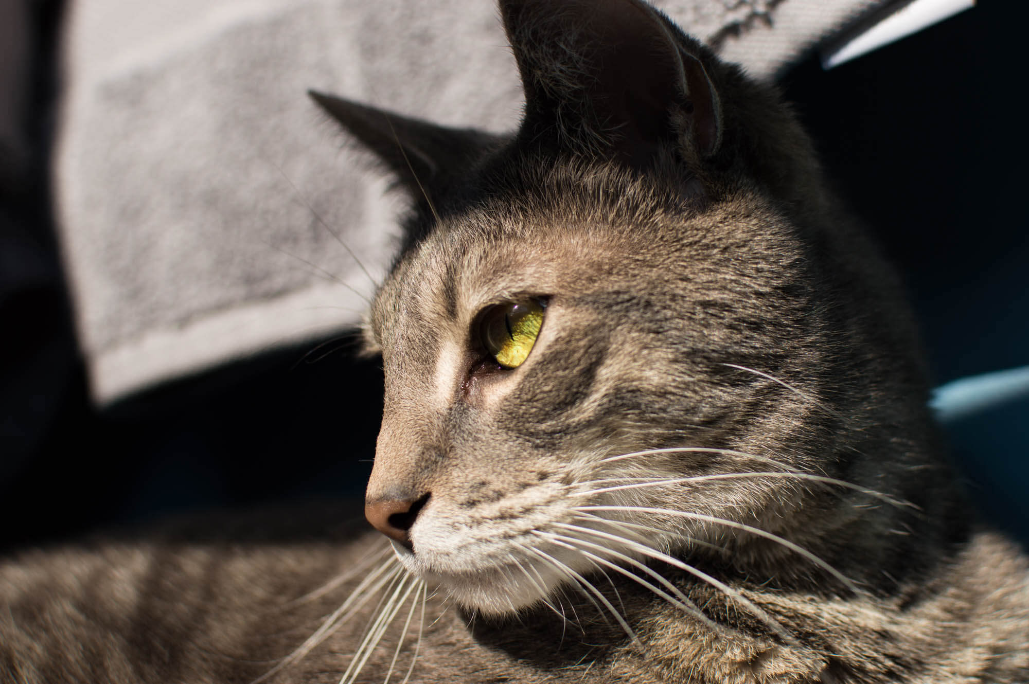 Joe's cat Cas